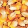 枣阳傲现养殖求购玉米大豆高粱油糠麸皮菜粕菜饼等饲料原料
