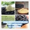 黑豆粉 水溶性黑豆粉 喷雾干燥