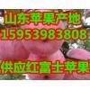 【15953983808】山东红富士苹果供应批发
