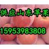 【15953983808】山东红富士苹果今日最新价格