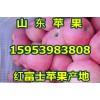 15953983808山东红富士苹果批发最新报价