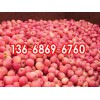山东红富士苹果出售价格山东苹果出售基地