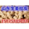 山东生姜产地水洗姜批发价格便宜出售