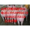 13954996619山东仔猪小猪苗猪常年销售