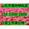 15953983808山东红富士苹果今日交易价格0.7