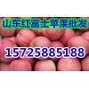 红富士苹果产地每日市场批发价格动态走势