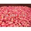 红富士苹果价格山东苹果批发产地山东红富士供应价格