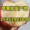 山东精品红富士苹果产地大量供应