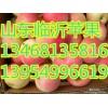 13954996619山东红富士苹果基地销售