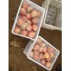 陕西膜袋红富士苹果批发多少钱一斤 红富士苹果价格行情