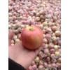 陕西散装膜袋红富士苹果价格 红富士苹果基地批发