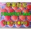 今日红富士苹果行情报价 山东优质红富士大量低价出售