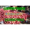 山东红富士苹果产地价格大降价了