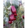 哪里能够批发到便宜的新疆红枣?