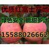 山东冷库苹果大量供应;保证质量;价格便宜