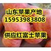 今日纸袋红富士苹果价格行情15953983808
