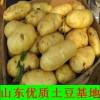 山东土豆价格荷兰十五土豆批发价格