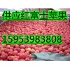 红富士苹果供应基地15953983808冷库红富士苹果批发