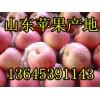 山东冷库红富士苹果低价批发供应