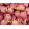山东冷库红富士苹果低价批发供应山东苹果产地