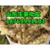 18769991603山东生姜 小黄姜 面姜批发价格