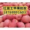 18769991603山东红富士苹果批发今日价格