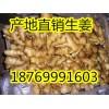 18769991603山东大姜生姜面姜姜种大量供应