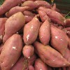 18号红薯供应价格红皮白心地瓜批发