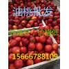沂蒙山油桃批发市场脆甜油桃价格