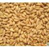 大量采购小麦