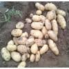 山东春季新土豆上市了