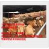 改善饲料适口性增加牛羊采食量的益生菌添加剂厂家招代理