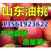 山东省大棚油桃上市价格查询13561923622