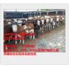 圈养牛喂益生菌解决不吃精饲料问题
