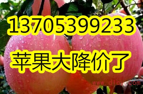 QQ图片20161029111928_副本