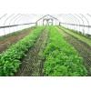 影响蔬菜大棚建设造价的因素有哪些