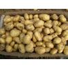 山东土豆产地价格
