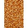 现款求购稻谷玉米高粱荞麦黄豆菜籽等饲料原料1