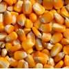 求购玉米小麦次粉麸皮高粱DDGS等饲料原料