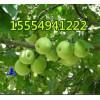 15554941222山东藤木.辽伏苹果直销多少钱一斤