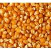 玉米长期求购