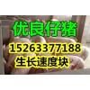 15953983808山东三元仔猪价格哪里便宜最新仔猪报价