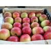 山东 嘎啦美苹果大量上市了