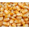 大量求购玉米小麦高粱黑豆黄豆等