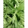 保健蔬菜 非洲冰草种子 营养价值高且口感清脆 为主的蔬菜