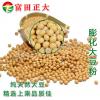 供应膨化大豆粉 小黄面 全脂膨化大豆粉,饲料添加剂,饲料原料