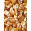 玉米收购商 大量收购玉米 高粱 大豆棉粕 小麦等原料