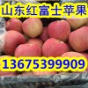 红富士苹果批发 山东地区今日报价 纸袋红富士价格