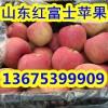 红富士苹果最新报价 山东红富士苹果今日五毛上车