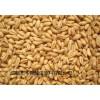 求购糯米高粱大米碎米小麦玉米等